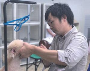 大分愛犬美容学院講師:松林智宣
