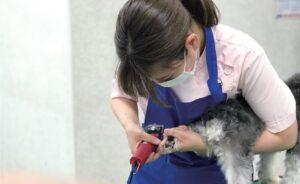大分愛犬美容学院:犬の爪切り実習