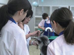 大分愛犬美容学院:犬のトリミング実習
